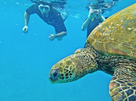 Watching Honu Underwater